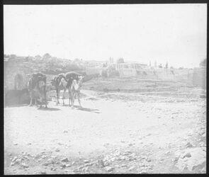 Glasplattendia Jerusalem vn SO (bei silwan)