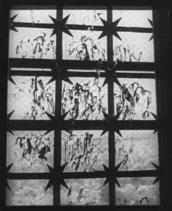Glasplattendia Fenster in der aksa-Moschee [Jerusalem]