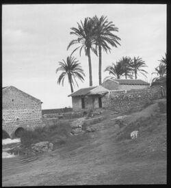Glasplattendia Palästina, Zwischen Jaffa und Jerusalem, Dorf und Mühle