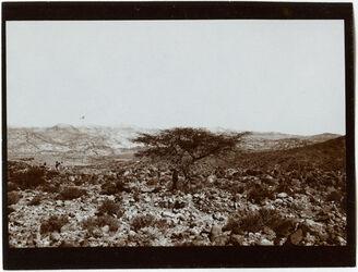 Fotografie Akazie am Ausgang des nakb el-hawi Aussicht n. N (w. [wadi] rarbi [?], er fed)