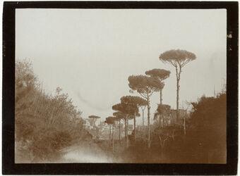 Fotografie Pinien am Weg n. Camaldoli