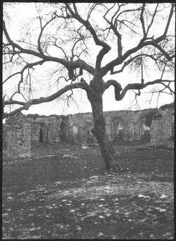 GDIs00383; Fotografie; Hof d. weissen Moschee in ramle [Ramla, Weiße Moschee], aus Nachlass von rund 880 Fotografien von Valentin Schwöbel