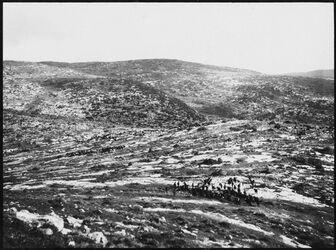 GDIs00435; Fotografie; Ziegenherde nördl. v. el-hadab Blick n. N (w. [wadi] ed-dilbe), aus Nachlass von rund 880 Fotografien von Valentin Schwöbel