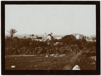 Fotografie ginin [dschinin, djinin] v. W Gilboaberge [Jenin/Gilboa]