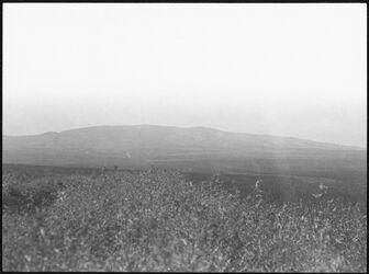 GDIs00523; Fotografie; g. [dschebel, djebel, Dschebel Ed-Dahi] ed-dahi v. NO v. Weg v. endur n. Nazareth, aus Nachlass von rund 880 Fotografien von Valentin Schwöbel