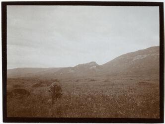 Fotografie Am Ostufer des Sees v. Tiberias Blick n. N. (dahn eg-guad [?]) [See Genezareth]
