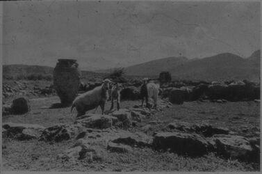 Glasplattendia Mallia [Malia?] auf Kreta (Blick v. NW)