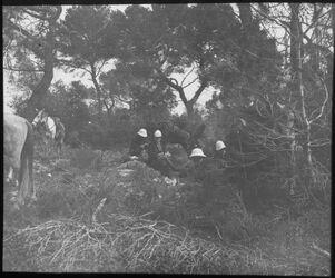 Glasplattendia im Wald von bet mahsir [Bayt Mahsir]