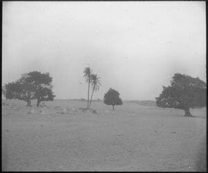Glasplattendia Molem. [muslimischer] Friedhof b.d. Cheopspyramide [Gizeh]