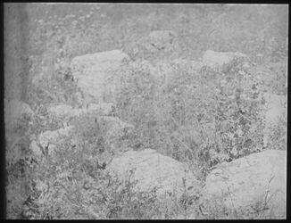 Glasplattendia Einfacher Steinkreis am w. [wadi] selihi