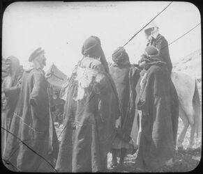Glasplattendia Wadi el-rar, Dalm. [Dalman] U. Bed.