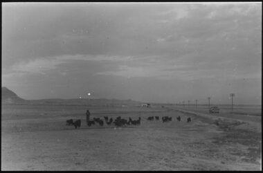 Glasplattendia Ziegenherde in der Jordanebene bei Jericho