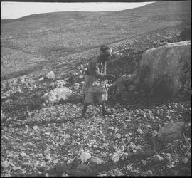 Glasplattendia Sämann [Palästina]