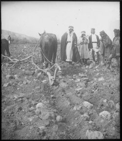 Glasplattendia Pflügende Beduinen b. Hippos [Kalat el-hosn]