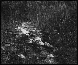 Glasplattendia Auf d. Felsige Mt 13,5 [Gleichnis vom Sämann]