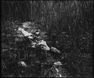 Glasplattendia Auf das Felsige Mt. 13,5 [Gleichnis vom Sämann]