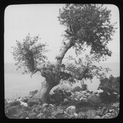 Glasplattendia See v. Tiberia [See von Tiberias, See Genezareth] von Hippos [Kalat el-hosn] Terebinthe