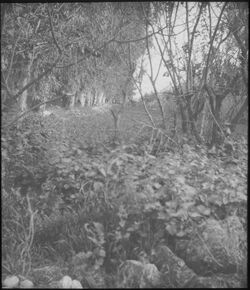 Glasplattendia Eukalyptusallee bei zubbid