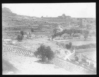 B IV 2; Glasplattendia; Oberes Käsemachertal [Jerusalem]