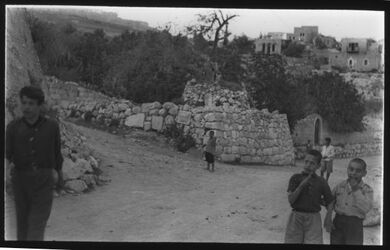 Glasplattendia Baum des Jesaja, Jerusalem, bei Birket el-Hamra [Siloah]