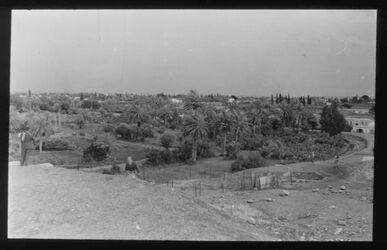 Glasplattendia Oase von Jericho, vom Tell aus gesehen