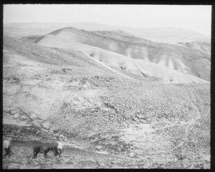 Glasplattendia Am Wege n. ch. [chirbet] Mird (Hirbet Mird = Hyrkania - Festung südöstlich von Jerusalem)