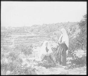 Glasplattendia Bethlehem v. N.