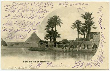 Postkarte Bord du Nil et Palmiers. [wohl Gizeh]