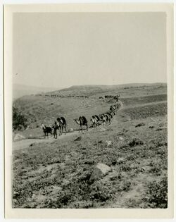 Fotografie wadi mastaba [?] [belka]