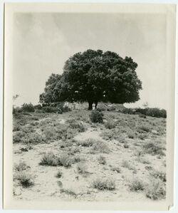 Fotografie nebi oscha