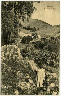 Postkarte Kolonie Rosch-Pina