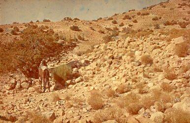 Dia Mann mit Pferd, W. Mauer v. S.