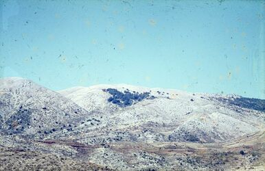 Dia Zedern auf dsch. Baruk (1800 m) [Gebel baruk]