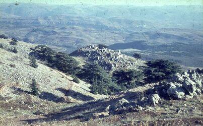 GDId01576; Dia; Zedern auf dsch. Baruk [Gebel baruk] 1800 m, gelb-schwarzer Plastik-Diarahmen, Bestand von hölzernen Diakisten mit insgesamt rund 1.000 Kleinbilddias einer Palästina-Exkursion