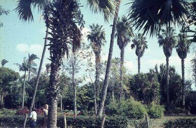 Dia Alexandria Park