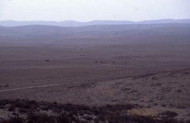 Dia Blick in die Wüste mit Kamelen vom Tell Arad [Israel-Exkursion]