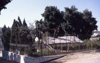 Dia Hebron - Terebinte nach G. Dahlmann [sic, Gustaf Dalman] [Israel-Exkursion]