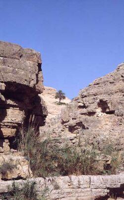 Dia Einsame Palme an der Wasserleitung aus dem Wadi gesehen [Israel-Exkursion]