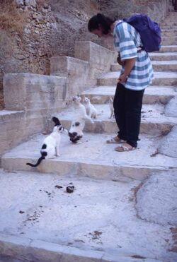 Dia Doro mit den Katzen des Klosters [Georgskloster, Wadi Kelt, Israel-Exkursion]