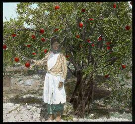 Glasplattendia Granatapfel mit Früchten