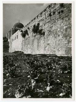 Fotografie dreifaches Tor am Südende bis haram [Jerusalem]