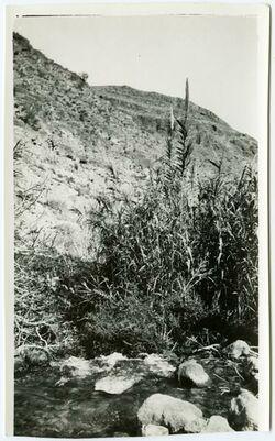 GDIp04070; Fotografie; ras el 'en f. odscha [oga], in Bestand von rund 5.000 nach Themen und Orten sortierten Kleinbildabzügen