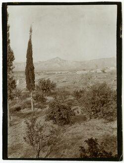 Fotografie Die Jericho-Oase, Blick nach S. W. [...]