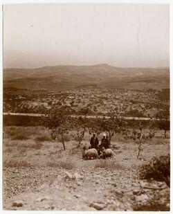Fotografie Bethlehem [?] u. Hirtenfeld v. W. bei der Michgrotte aufgenommen