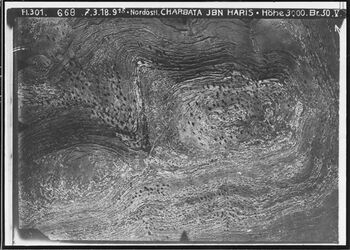 Fotografie Nordöstl. Charbata ibn Haris