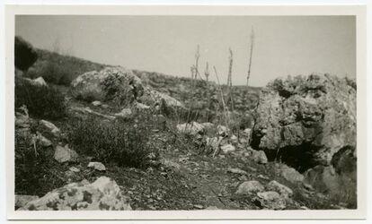 Fotografie Urzinea maritima i blom, nara ragen till Wadi Fara.