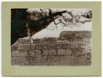 Fotografie Heilger Baum bei Banias [Banyas]