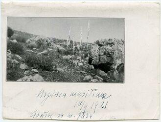 Fotografie am rukkad [oben]. Urzinea maritima. Abstieg zu w. fara [unten]