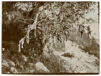 Fotografie heiliger sidr bei megdel [Megdel beni fadil]. Aufn. I. Brückner, Reymann, Alt Bertheau, Rot. [Rotermund]