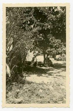 Fotografie Feigenbäume